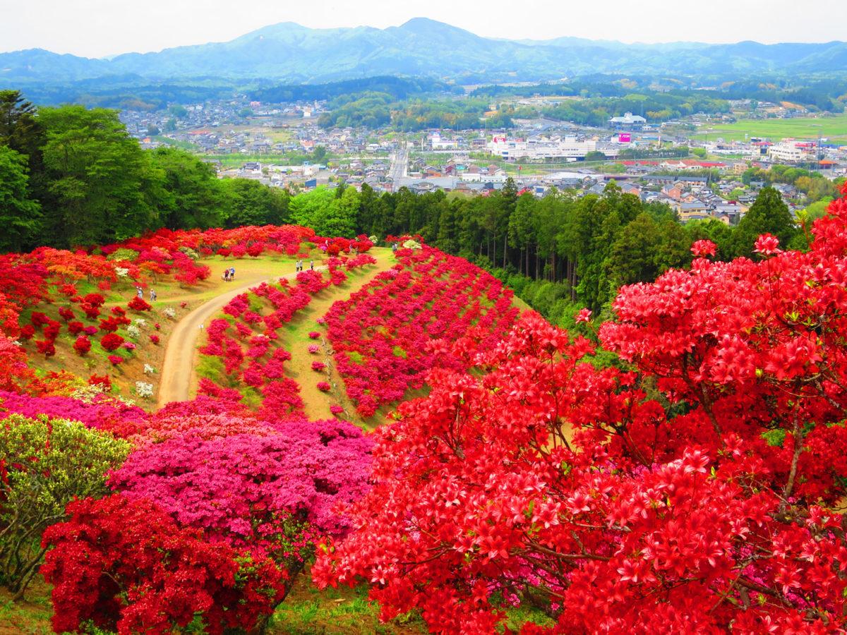 【絶景の山が赤く染まる日】笠間つつじまつりは4月13日から5月6日まで【茨城県笠間市】