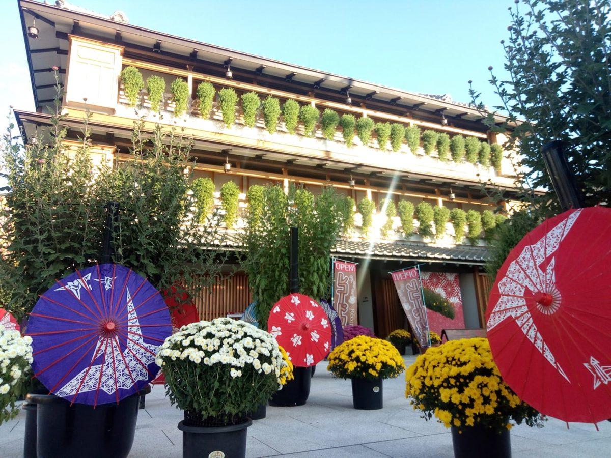 2020年情報【笠間の菊まつり】秋本番!日本最古の菊まつりで秋を満喫しよう!
