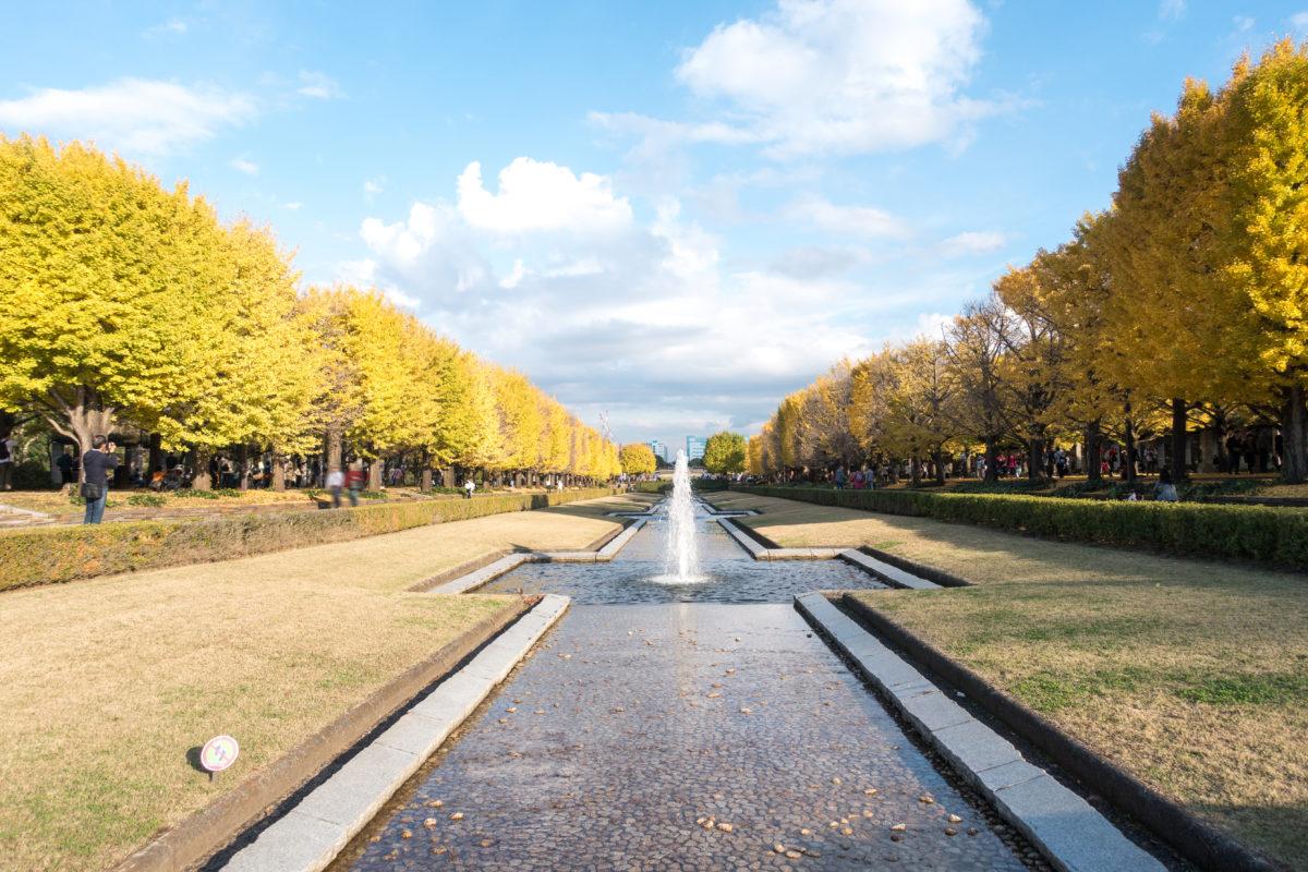 いちょうまつり4選。紅葉に深まる秋を感じるオススメのイベントをご紹介。