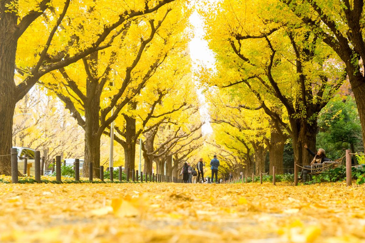 東北を代表する6つの祭が2020東京五輪会場のお膝元に集結 2018 JAPAN PEACE FESTIVAL in 青山まつり