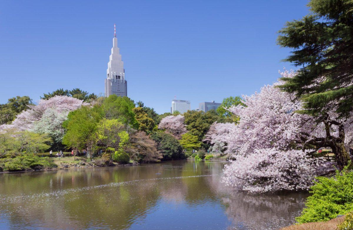 新宿御苑で桜!お花見の見どころ情報をご紹介!