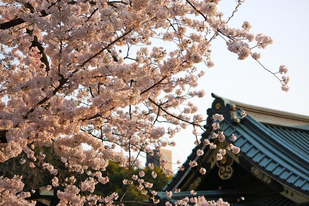 靖国神社でのお花見の楽しみ方をご紹介!境内で厳かに…足を延ばして周辺散策も♪