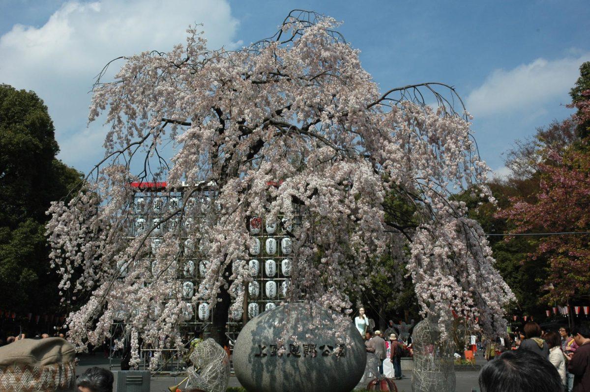 上野公園でのお花見の楽しみ方&見どころをご紹介!公園のどこがオススメ?