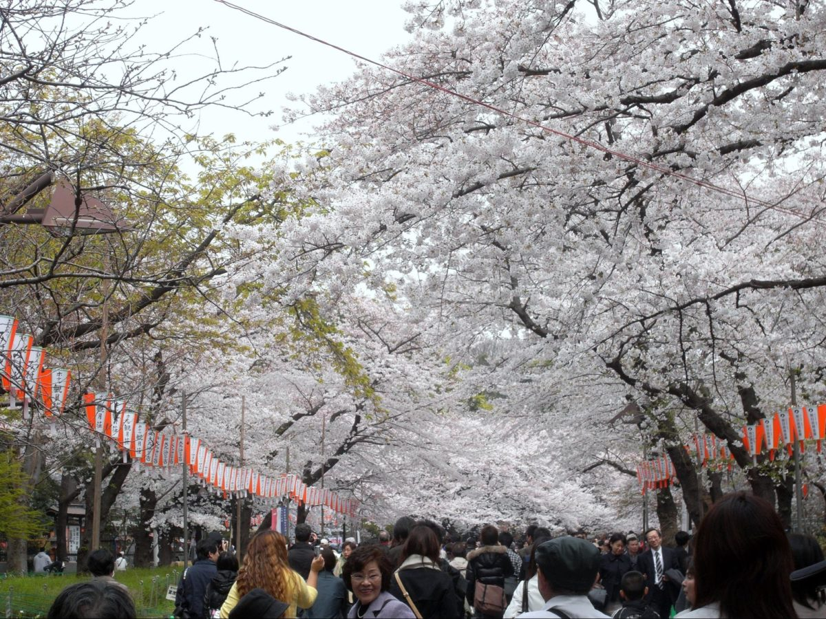 上野のお花見スポットおススメ5選!王道から穴場までご紹介!