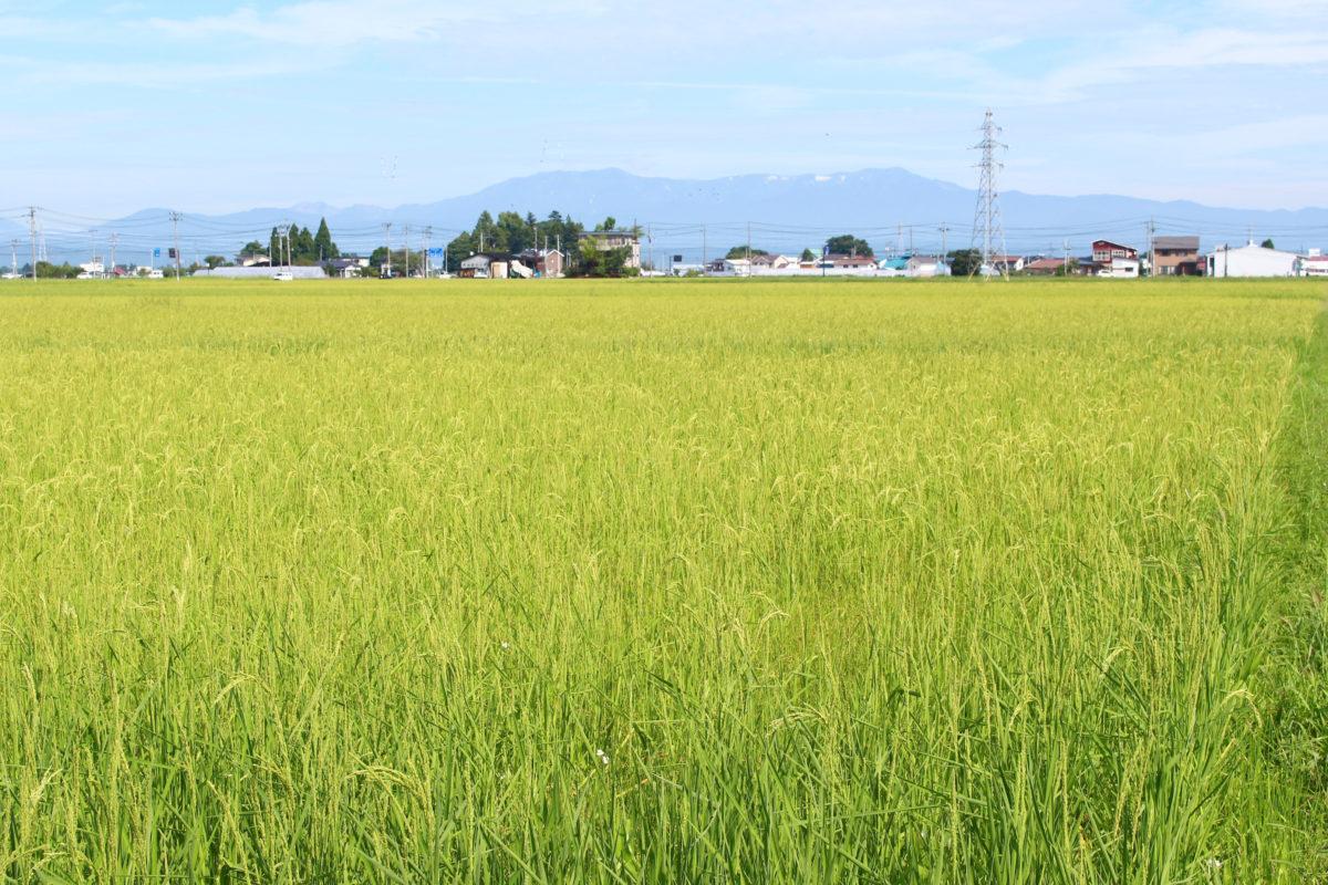 田植えの前に農作業の芸で豊作祈願!御田植祭をご存知ですか?【全国訪問ガイド付き】