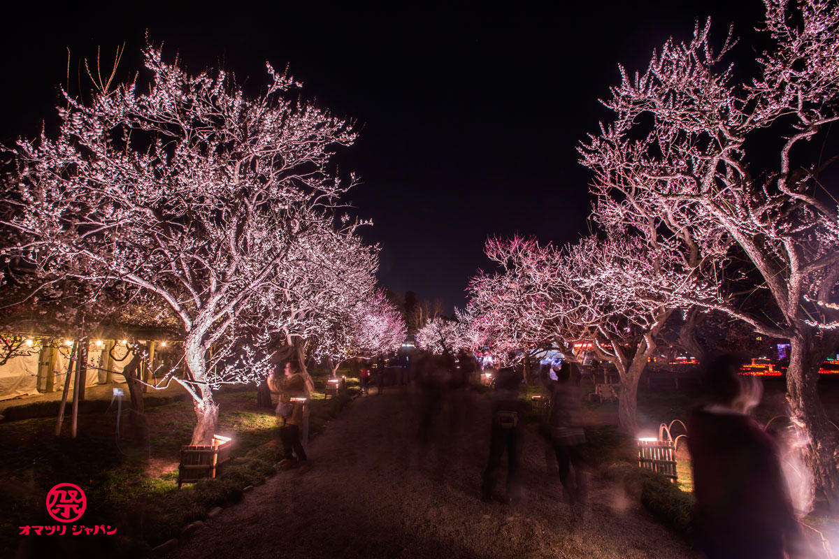 いよいよ春到来!100種類3,000本の梅がライトアップされる「夜・梅・祭」(花火もあるよ!)