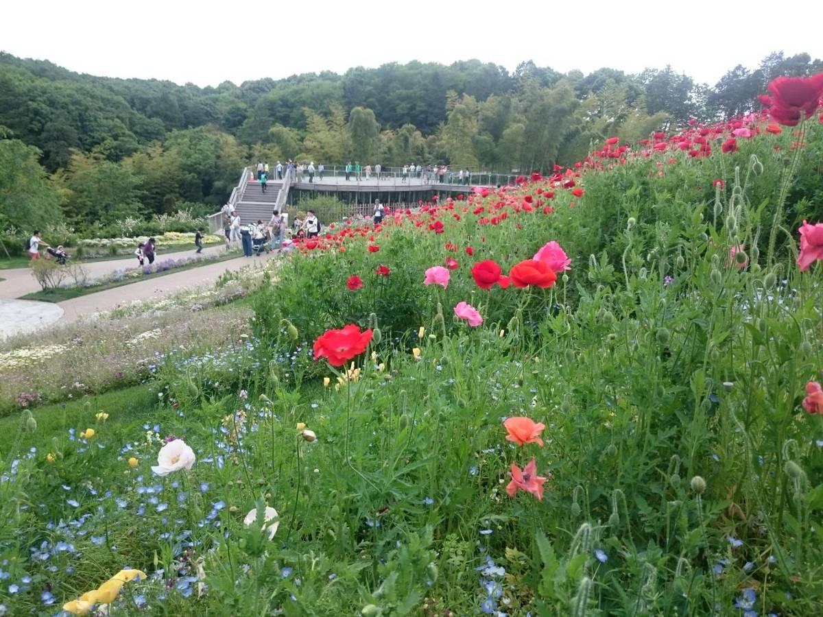 「里山ガーデンフェスタ」は色とりどりの花が楽しめる♪2020年春の見どころは?