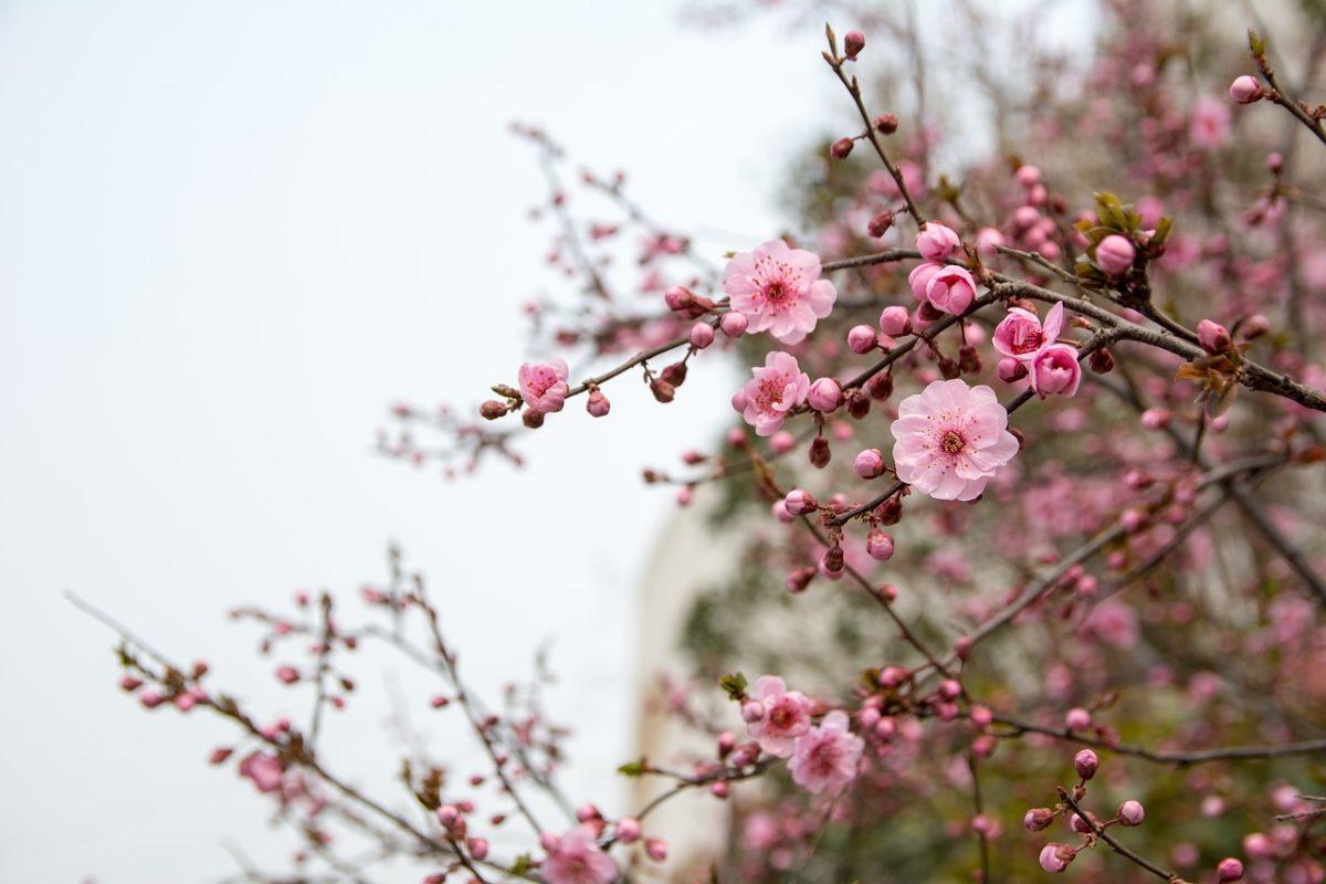 曲水の宴で春を想う。太宰府天満宮にて。〜SNS投稿から一気に春を、どうぞ〜