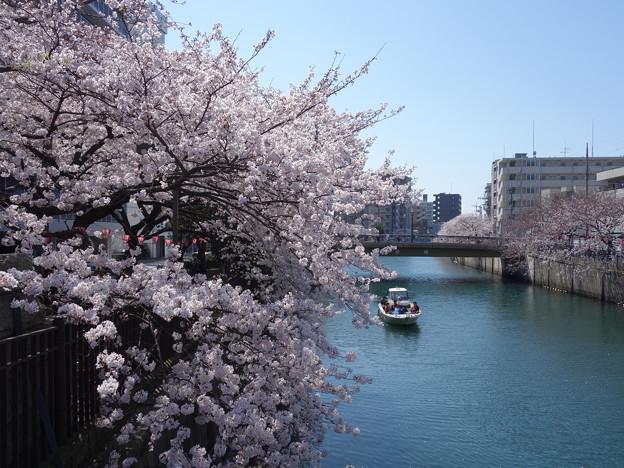 桜の下で気持ちよく飲んじゃおう♪「大岡川さくらまつり」のグルメ情報と見どころをご紹介!