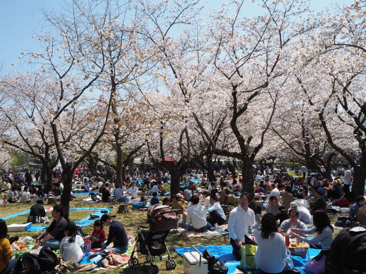 2019年、静岡まつりが開催中!満開の桜と時代行列が楽しめるこのお祭り、訪れた人の楽しみ方は?