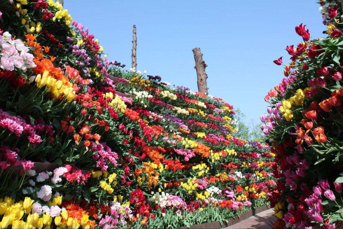 カラフルに映える、富山の春の風物詩!となみチューリップフェアの魅力とは?