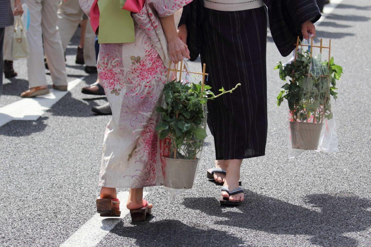 朝顔市、2020年の開催情報は?入谷に代表される朝顔まつりをご紹介!