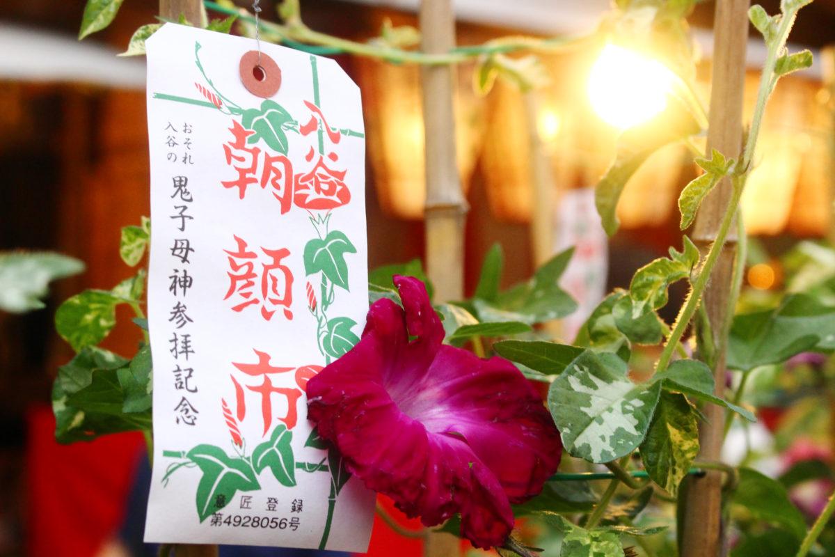 入谷朝顔まつりは東京・下町の夏の風物詩。ずらっと並んだ朝顔が入谷の町を彩ります!