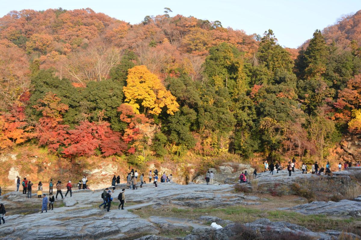 「長瀞紅葉まつり」、荒川沿いから宝登山の頂まで広がる秋のグラデーション