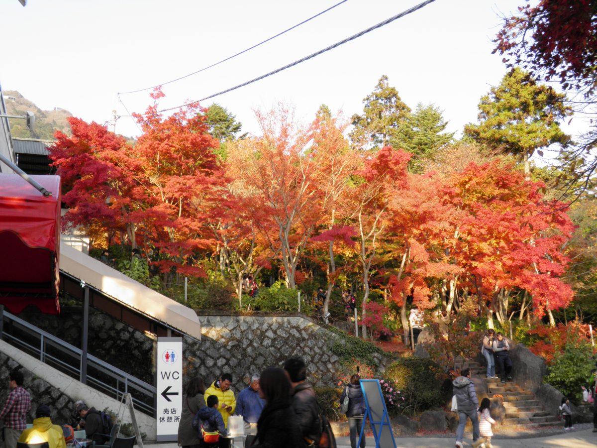「筑波山もみじまつり」、筑波山神社の宮脇からケーブルカーに乗って筑波山を丸ごと紅葉狩り