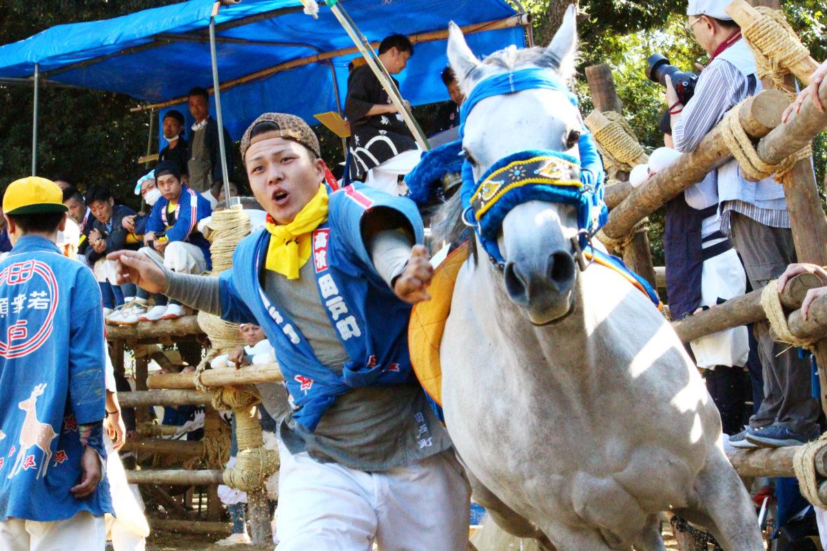 高浜おまんと祭りの迫力を見たか?馬が走る走る、吹っ飛ばされる。愛知の奇祭を紹介!