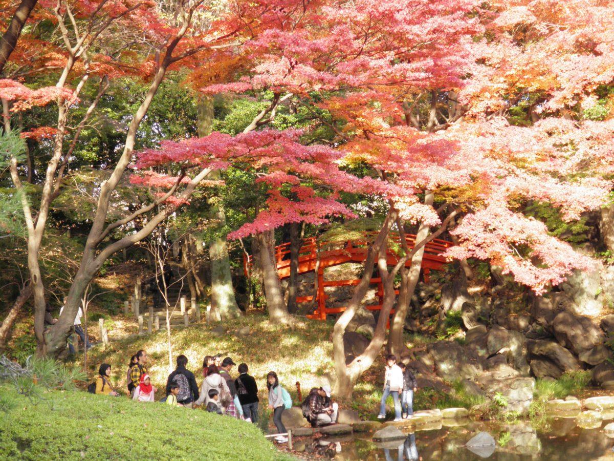 「小石川後楽園紅葉まつり」、場所ごとに異なる表情で語りかける紅葉