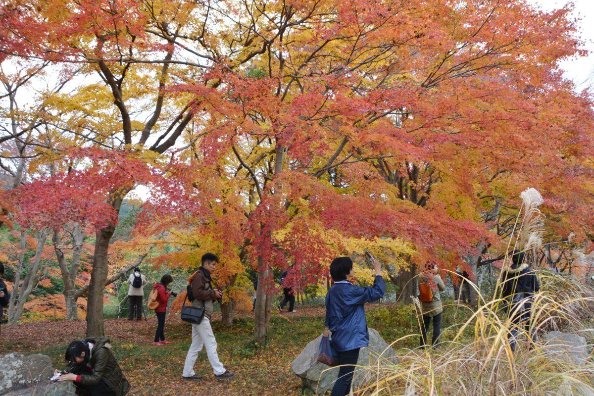 「嵐山渓谷紅葉まつり」、京都の嵐山に肩を並べる自然美