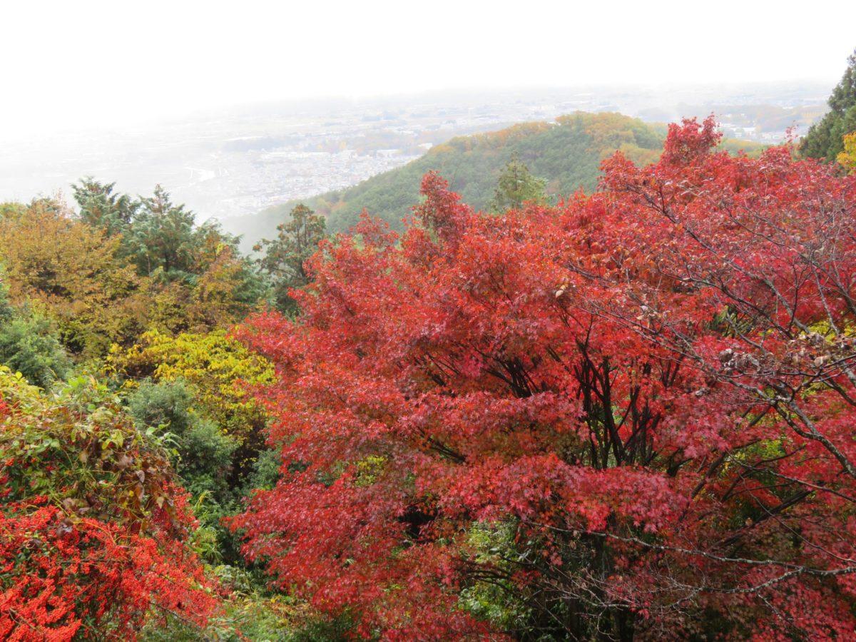「太平山もみじまつり」、天候や時間とともに変化する眺望を背景に楽しむ紅葉
