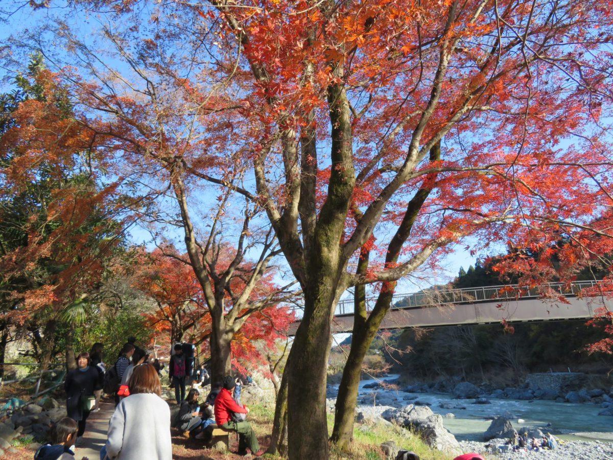 「みたけ渓谷秋色まつり」多摩川沿いに整備された遊歩道を紅葉狩りハイキング