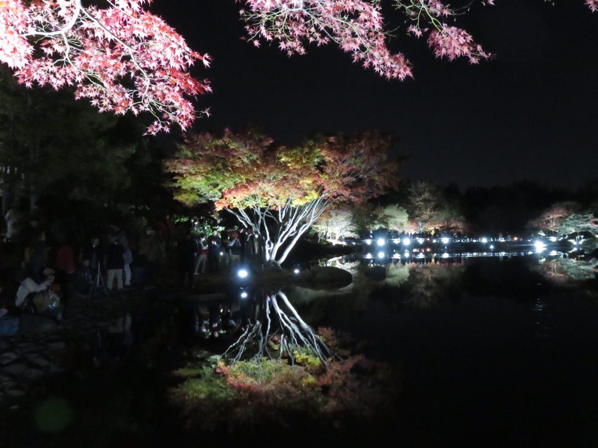 「国営昭和記念公園/黄葉紅葉まつり」夜間のライトアップで魅惑的な表情を見せる黄葉紅葉