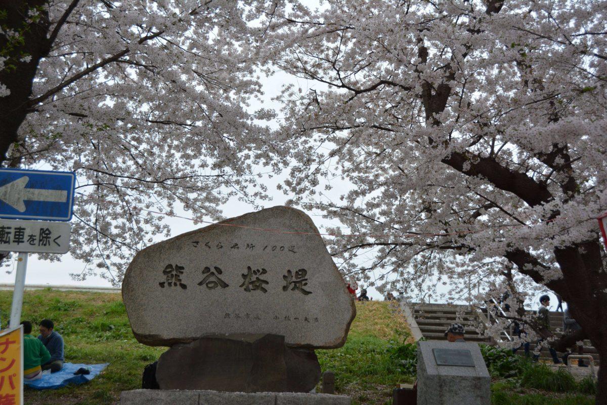 「熊谷さくら祭」約2キロにわたって約500本のソメイヨシノが一斉に花を咲かせる熊谷桜堤