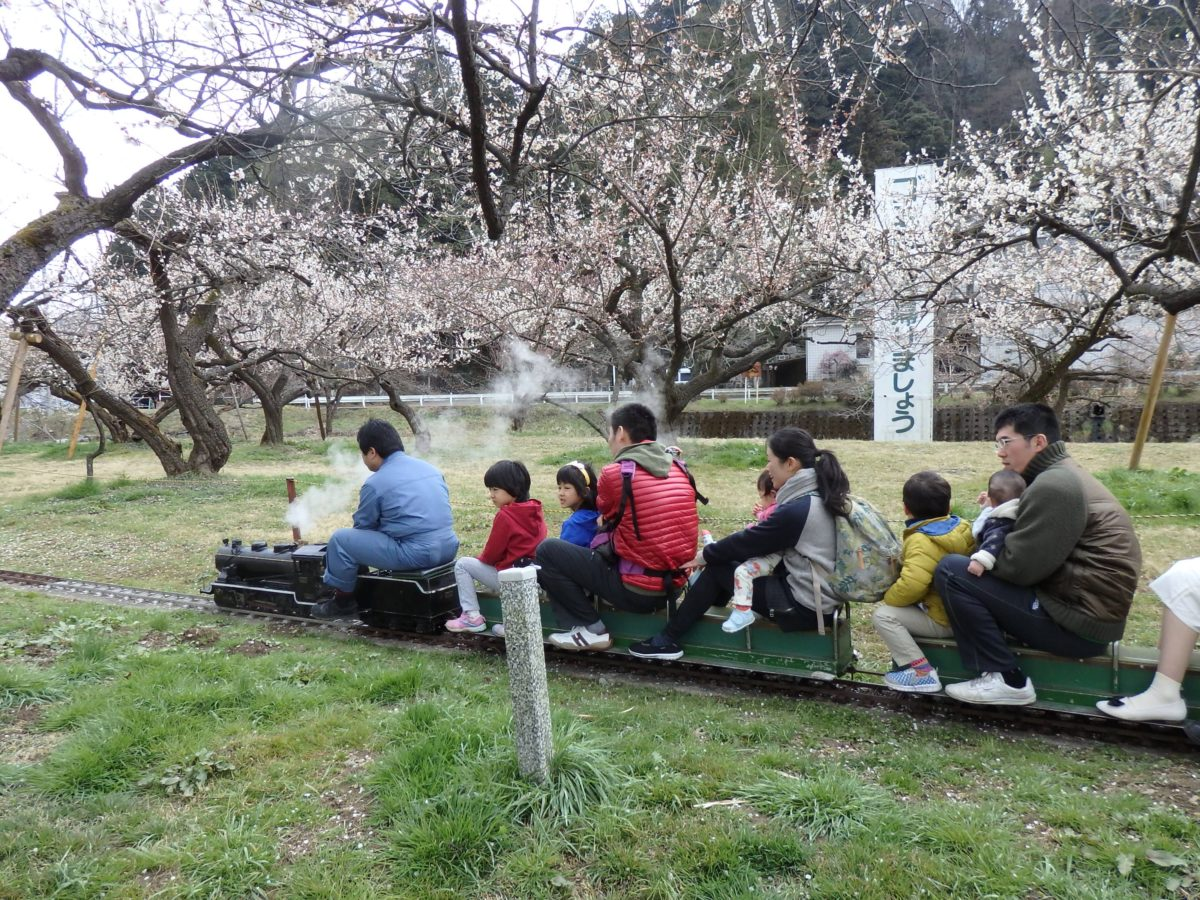 「越生梅林 梅まつり」関東三大梅林を走り抜けるミニSL