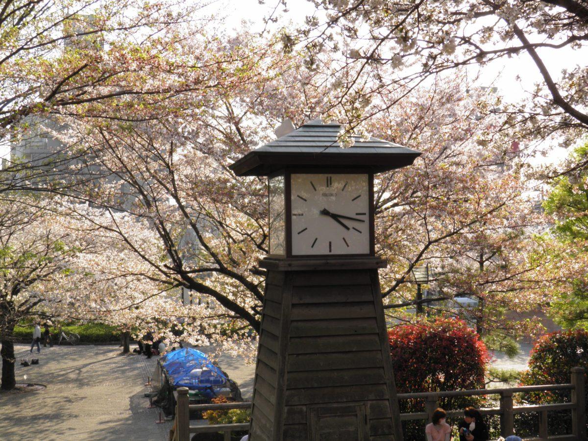「北区さくらSA*KASOまつり」江戸時代に第8代将軍の徳川吉宗が作り上げた桜の名所