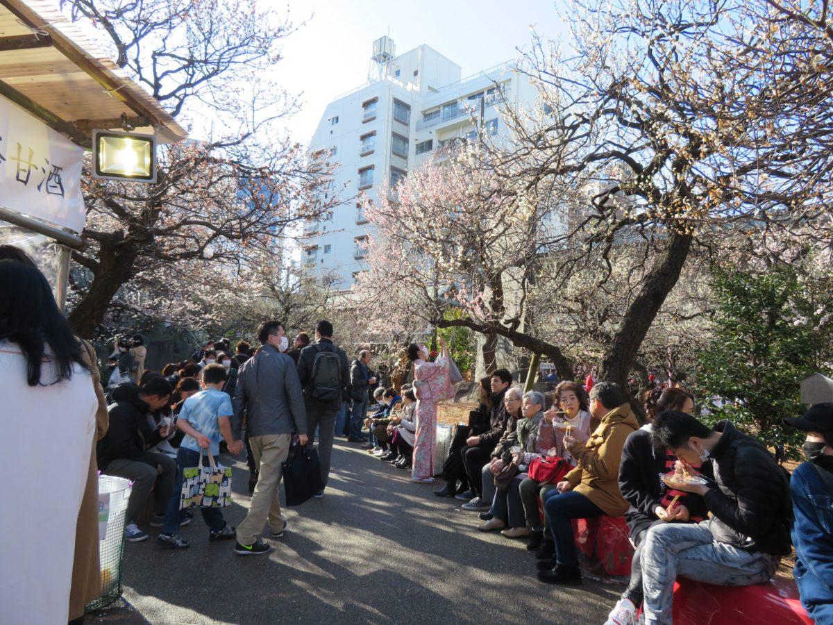 【湯島天神梅まつり】菅原道真を祀る神社で白加賀が初春の彩りを放つ梅園