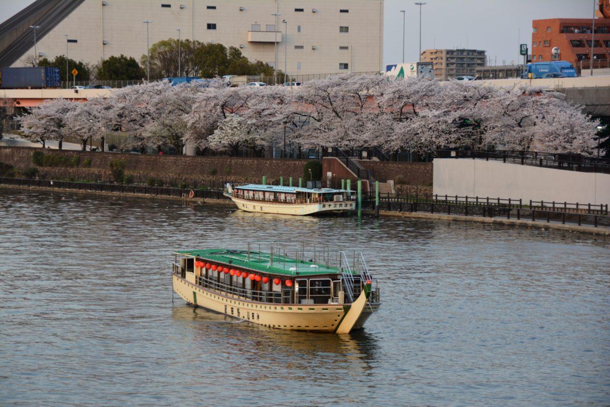 「墨堤さくらまつり」屋台船から隅田川の流れに乗って眺める江戸時代を起源とする桜の花