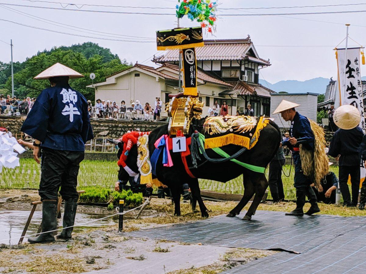「壬生の花田植」田舎の景色と華やかな飾牛|観光経済新聞