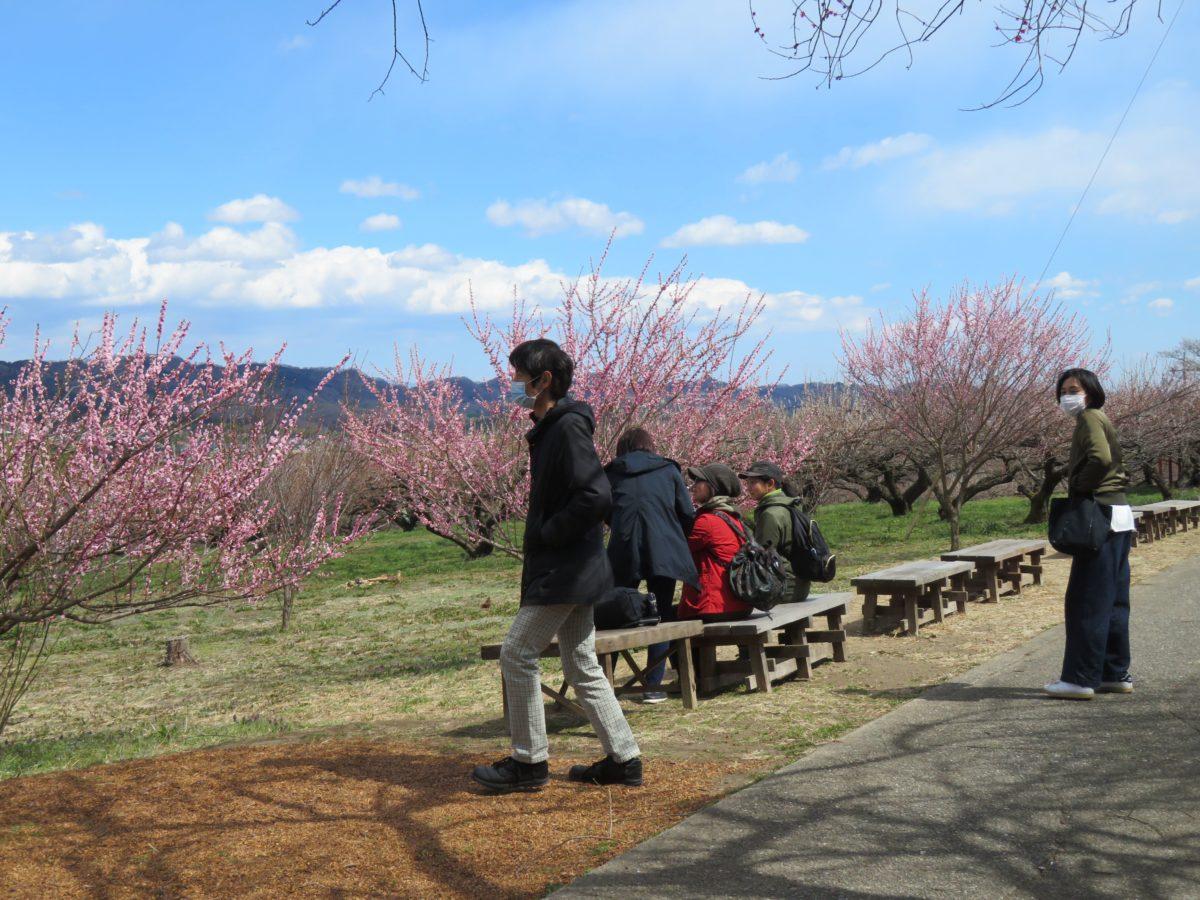 【秋間梅林祭】三軒茶屋から遊歩道に入り360度のパノラマで眺める群馬三大梅林