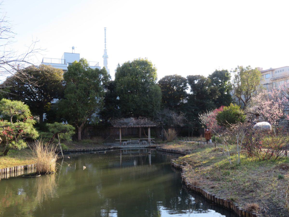 【向島百花園梅まつり】江戸時代から文人墨客のサロンとなった日本庭園を彩る梅の花
