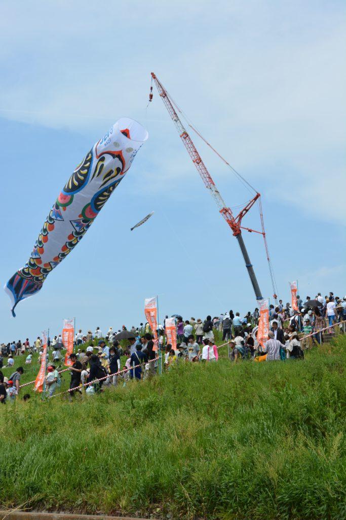 【ジャンボこいのぼり】クレーン車につられ利根川の上空で風に舞う日本一大きなこいのぼり