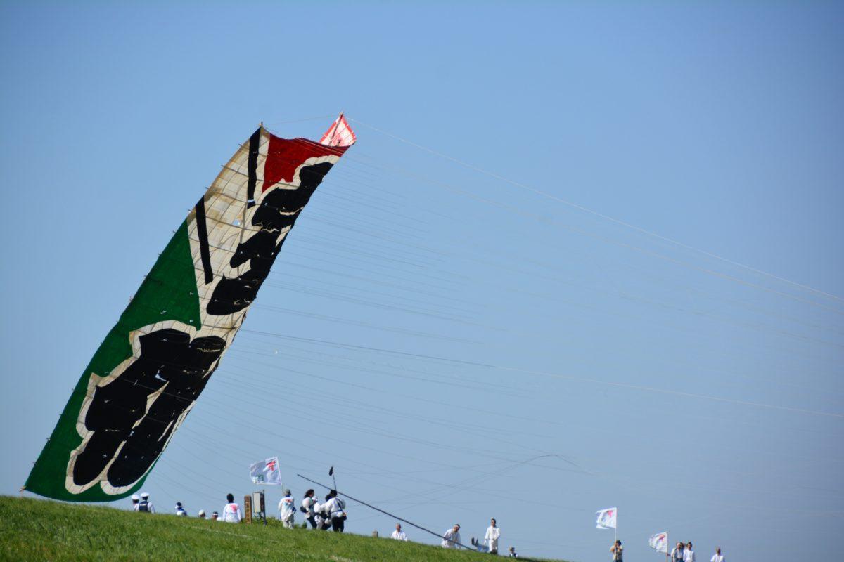 【大凧あげ祭り】春日部に流れる江戸川の上空に舞う日本一大きな凧