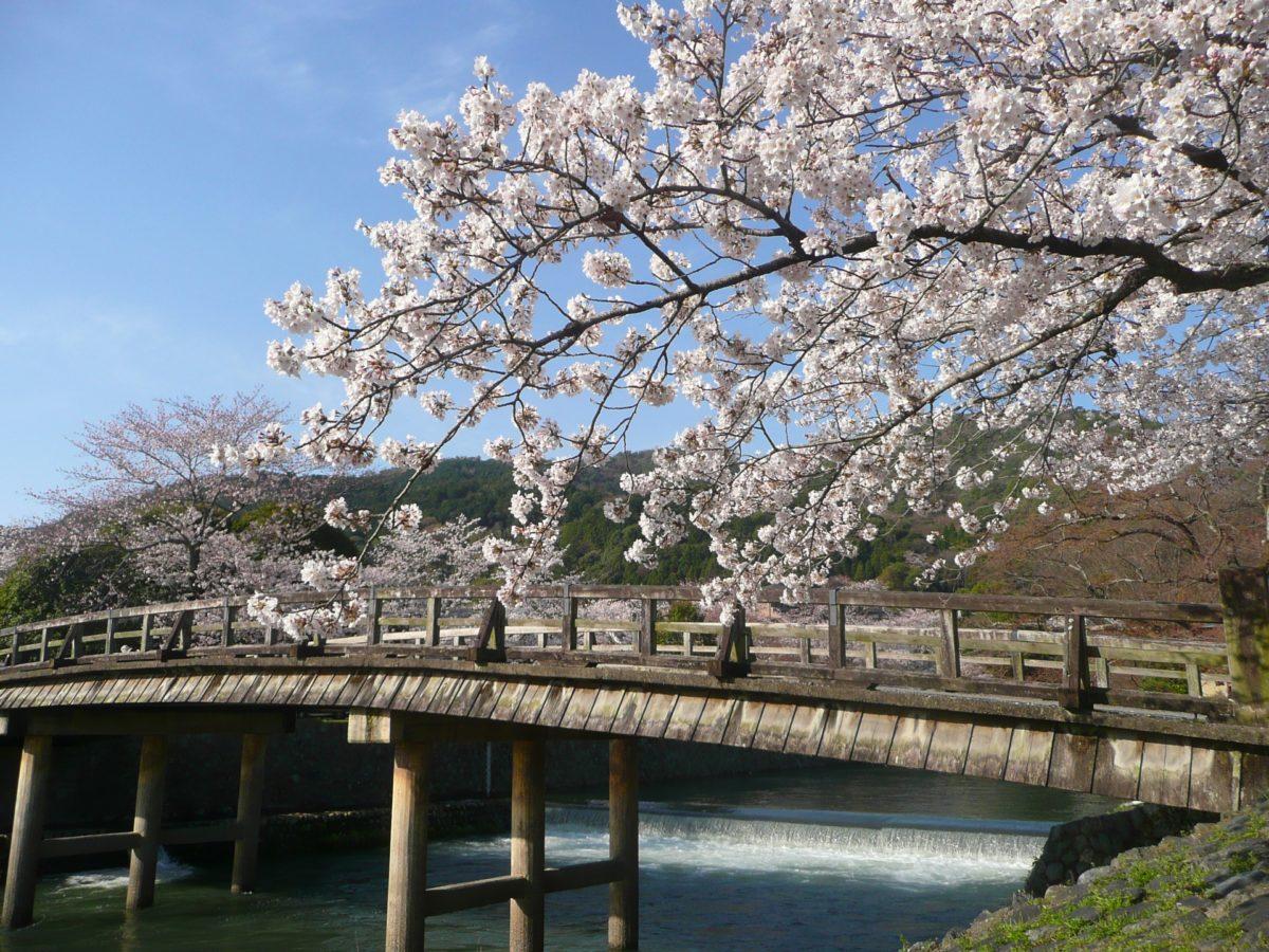 桜の季節は電車に乗ってちょっと出かけてみよう!関西の花見スポット