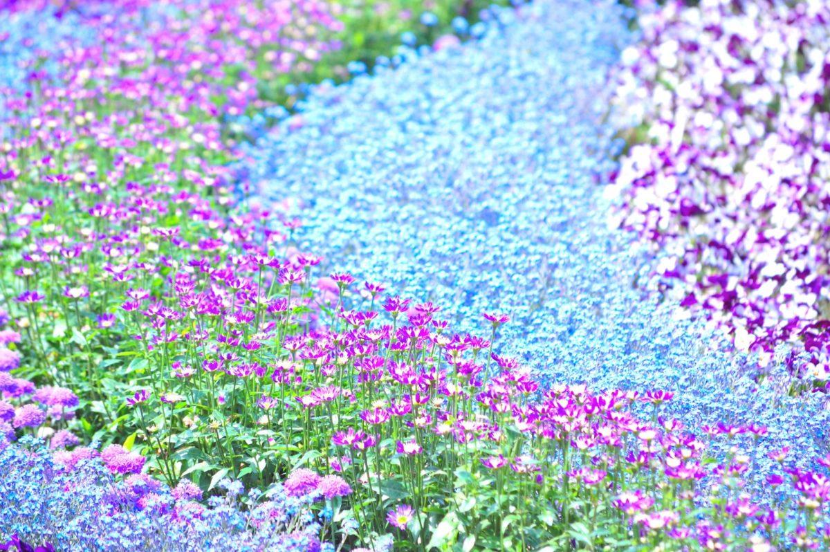 フラワーフェスティバル5選!初夏まで楽しめる、花の祭典!
