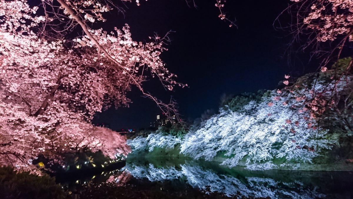 夜桜のライトアップは格別!厳選スポットを5ヶ所ご紹介!