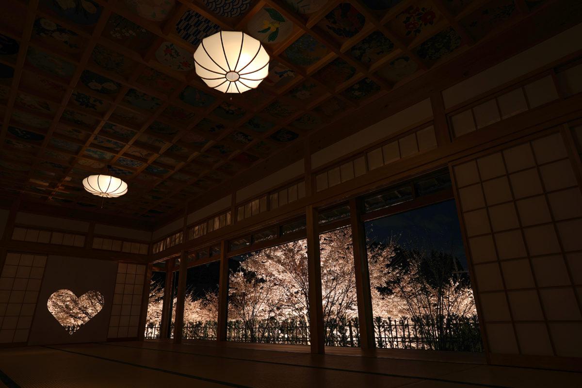 京都【正寿院】観桜会 夜間特別拝観 春の桜とハートの猪目窓