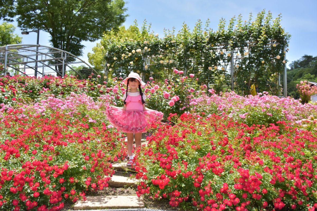 バラが楽しめるフラワーフェスティバル5選!コロナ明けはバラを楽しもう!
