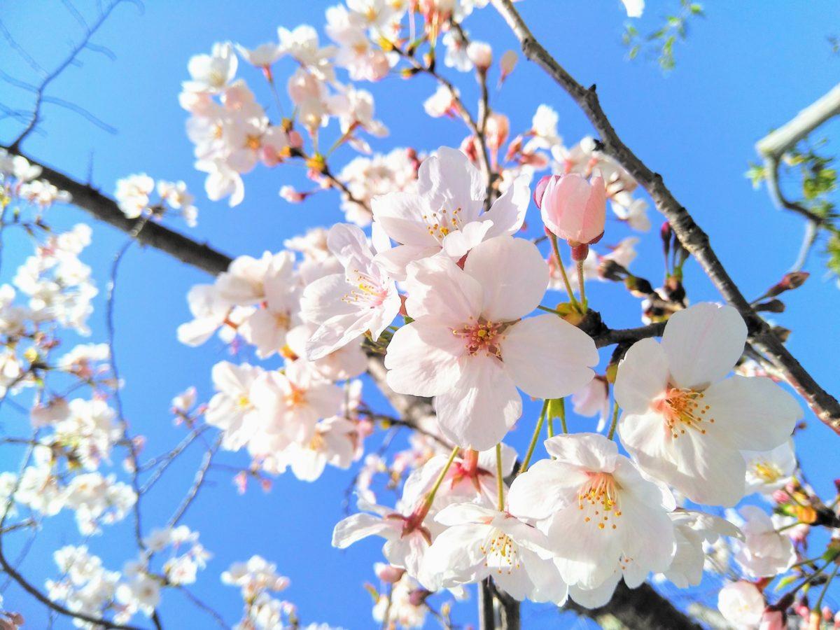 花の開花時期を総まとめ!見頃から花言葉までご紹介