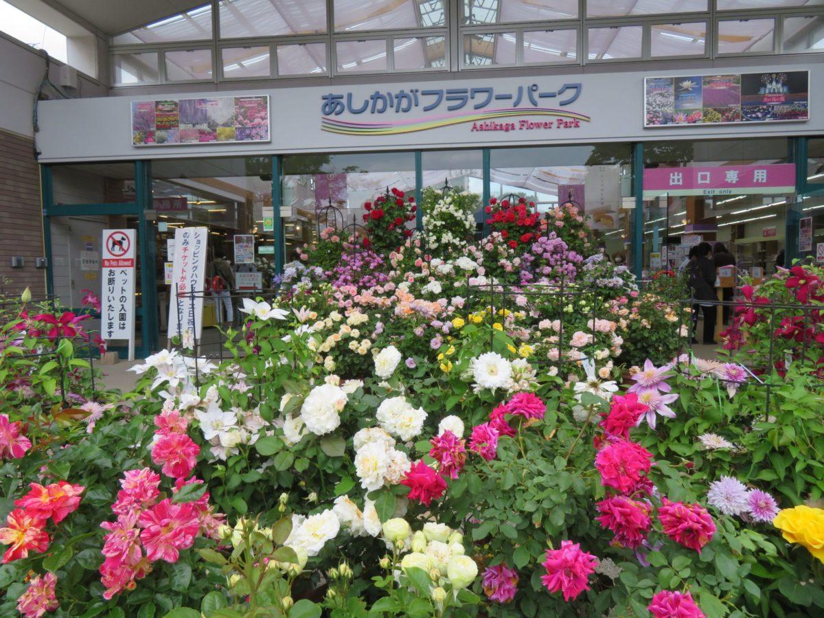 あしかがフラワーパーク・春のバラ祭りが開催中!花で覆われるローズガーデン