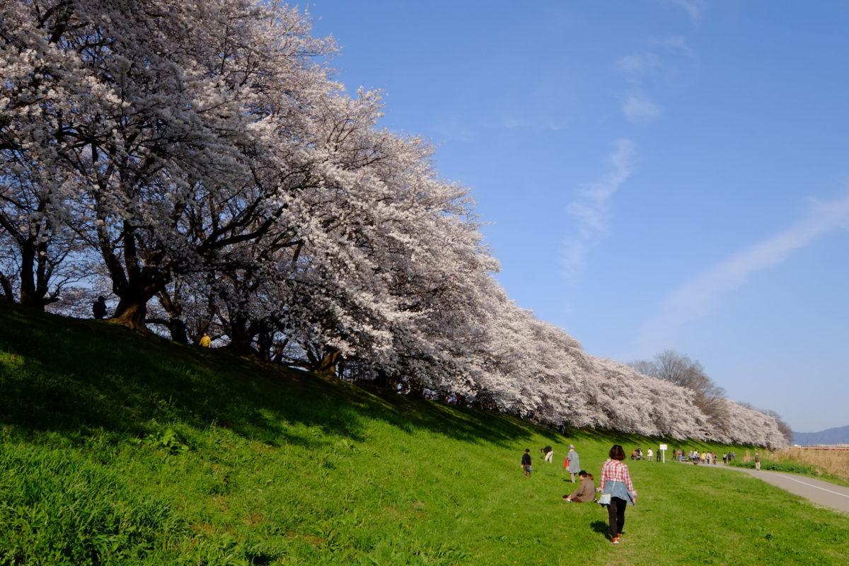 もう一度見るまで死ねるか!コロナが収束したら必ず見たい桜の絶景