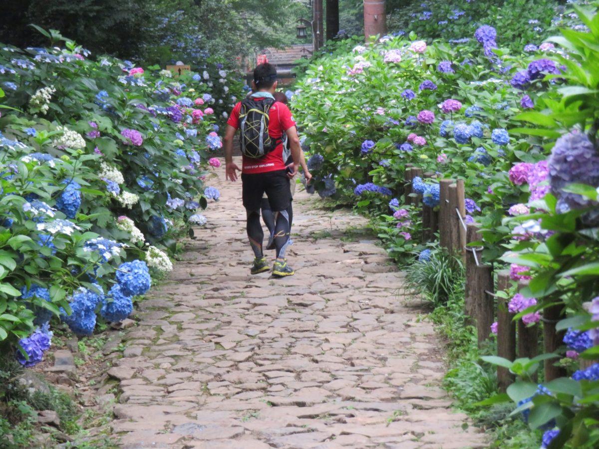 【太平山とちぎあじさいまつり】蔵造りの街並を見下ろす太平山の初夏の彩り