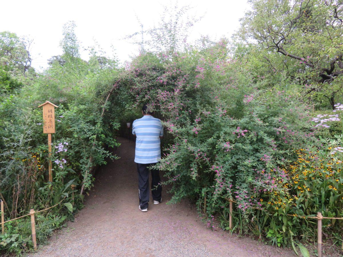 【向島百花園・萩まつり】アーチの中が秋の気配で満たされる萩のトンネル