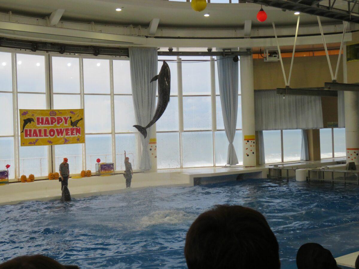 【アクアワールド・ハロウィン】ランタンの前でジャンプするイルカやアシカ
