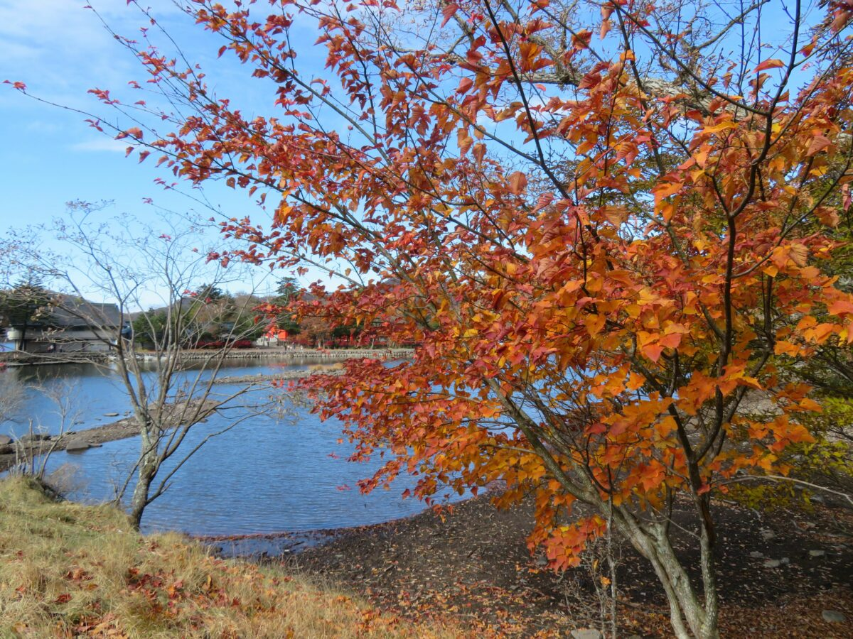 【赤城山の紅葉】高原の秋の彩りに包まれるカルデラ湖の大沼や神社の境内