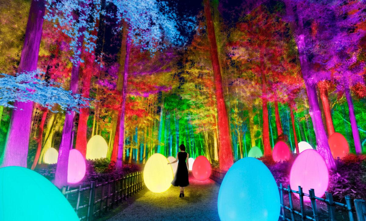 【チームラボ 偕楽園 光の祭】日本三名園・偕楽園がインタラクティブな光のアート空間に!