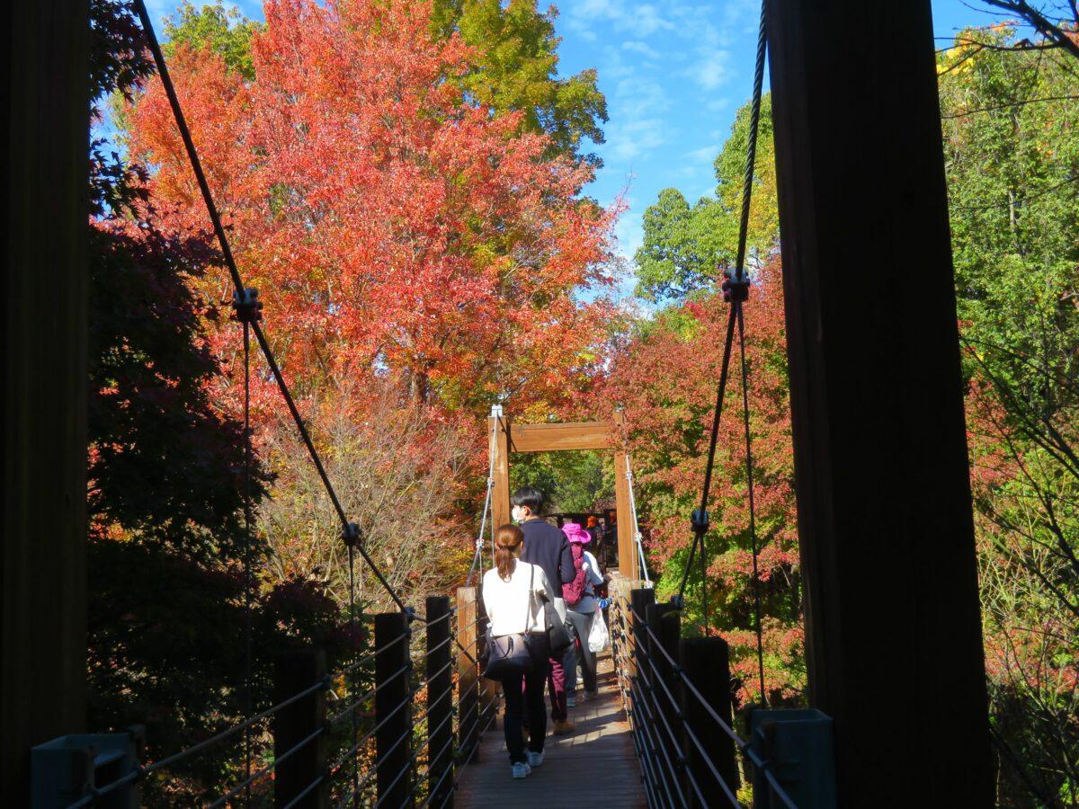 【万博記念公園紅葉まつり】ソラードを空中散歩しながら楽しむ万葉の里の秋