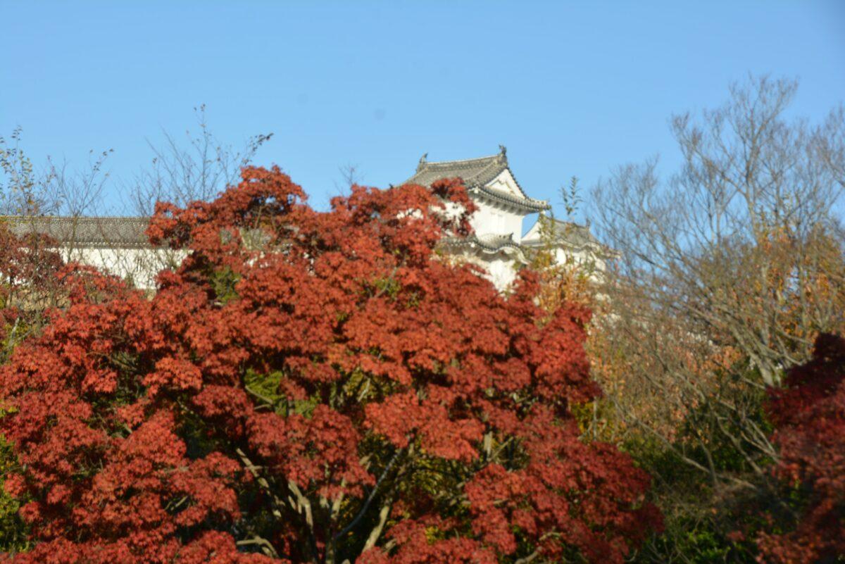 【好古園紅葉会】日本の秋の情緒と歴史が感じられる姫路城の池泉回遊式庭園
